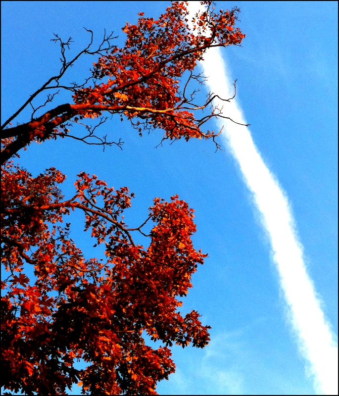 Autumn Contrail