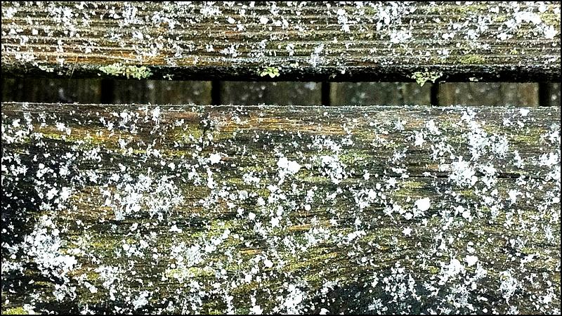 Snow and Lichen On Decking