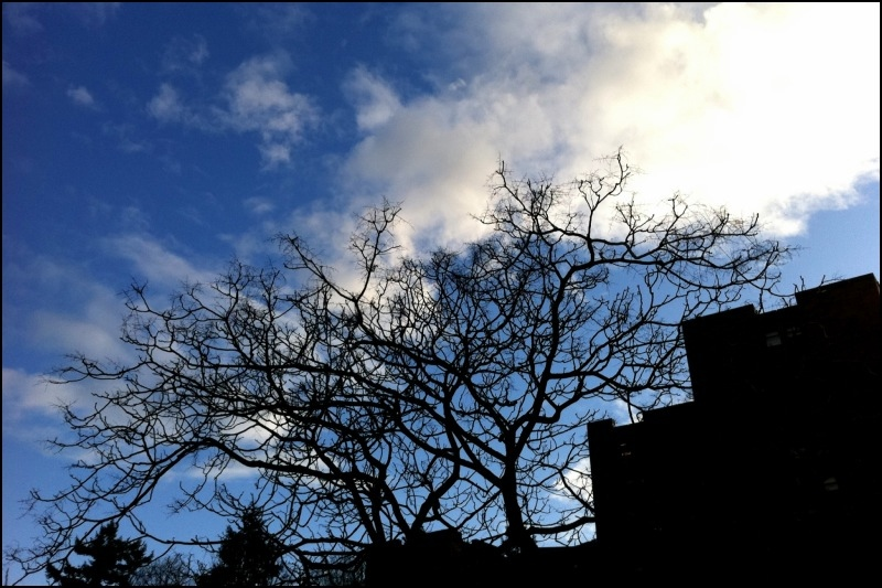 tree against sky