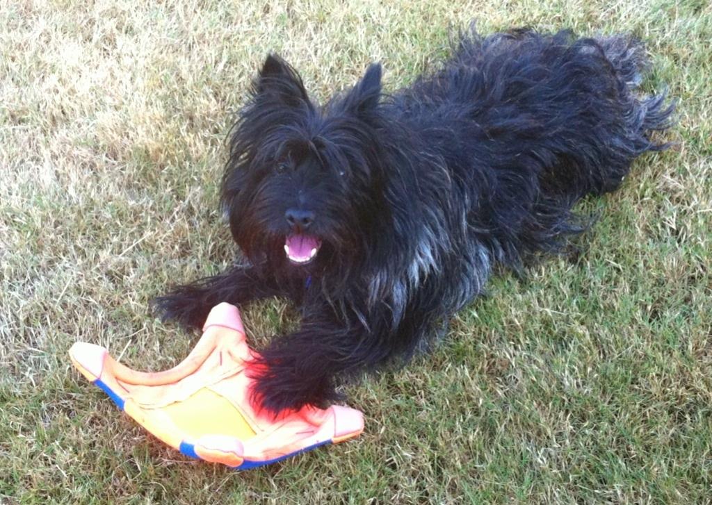 Katie with Frisbee